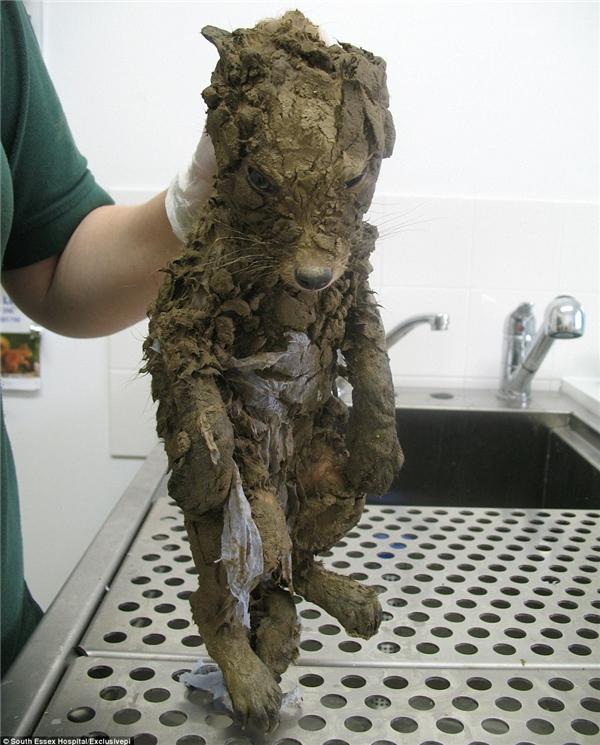 Cơ thể của sinh vật lạ bị phủ kín bởicáclớp đất dày cộm.