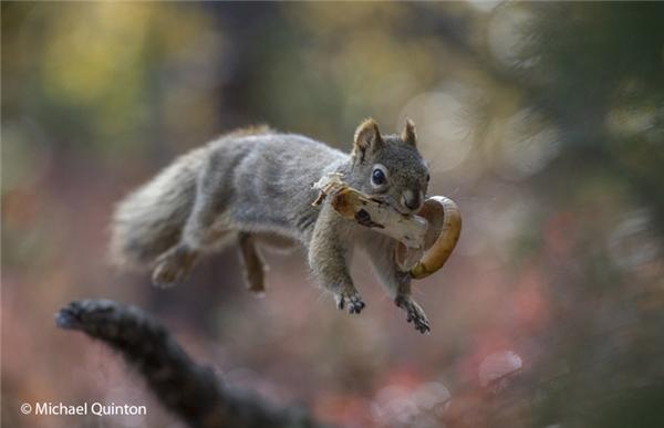 Thứ gì động vật ăn được thì người cũng ăn được: Nếu bạn nghĩ rằng thứ gì chim chóc hay sóc chuột ăn được thì con người cũng ăn đượcthì bạn sẽ chết sớm đấy. Cơ thể chúng khác hẳn cơ thể người, thậm chí chúng có thể ăn được những loại quả hay nấm mà con người không thể nạp vào cơ thể.