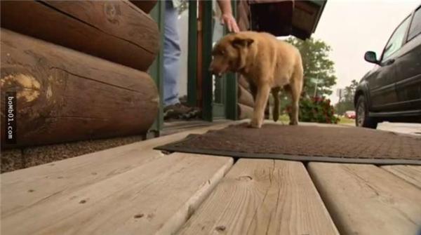 Mỗi ngày chú chó đi bộ tuần tra 6km khắp thị trấn.(Ảnh: Internet)