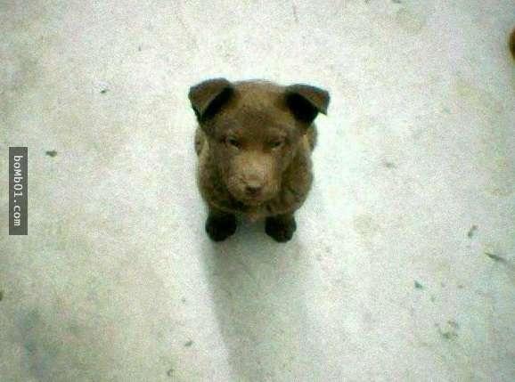 Ngay từ nhỏ, Bruno đã rất mạnh mẽ và kiên cường.(Ảnh: Internet)