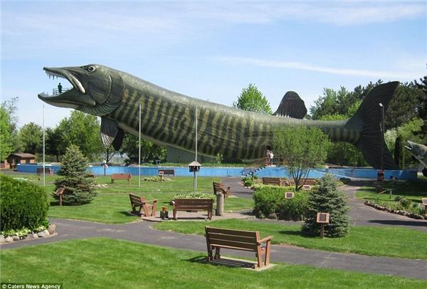 Chú cá Muskie khổng lồ này là trung tâm tòa nhà kỉ niệm câu cá nước ngọt ởHayward, Wisconsin.Hơn bốn tầng cao và dài như một chiếc máy bay, nếu chú cánày có thực, nócó thể nuốt chửng cả một chiếc xe buýt.
