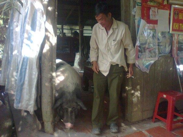 Chú heo gắn bó và thân thiết như một thành viên trong nhà ông Mạo. (Ảnh Internet)