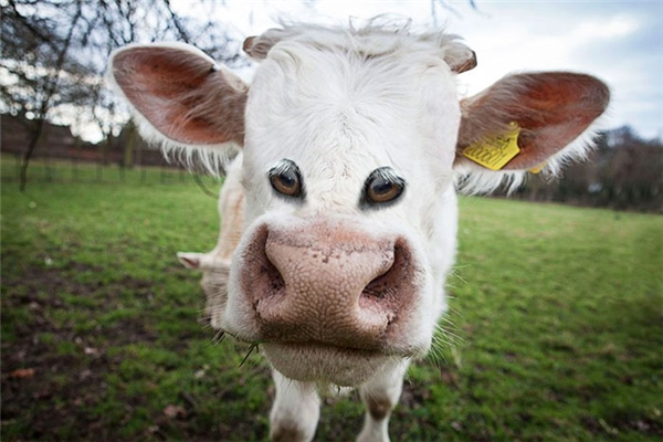 Vì sao mắt của anh lại mọc thấp thế? Là để nhìn cho rõ cỏ dưới chân hơn đấy mà.