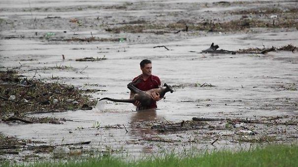 Người đàn ông này đã lội xuống dòng nước lũ để vớt chú chó bị nước cuốn trôi đi.