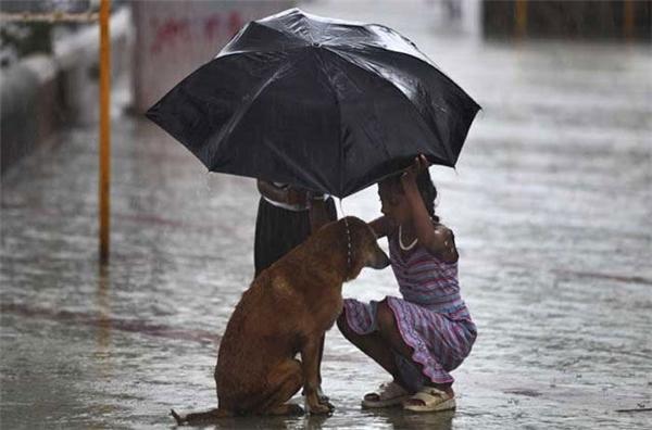 Một cô bé lấy ô của mình để che mưa cho một chú chó hoang trên một con phố ở Mumbai, Ấn Độ.
