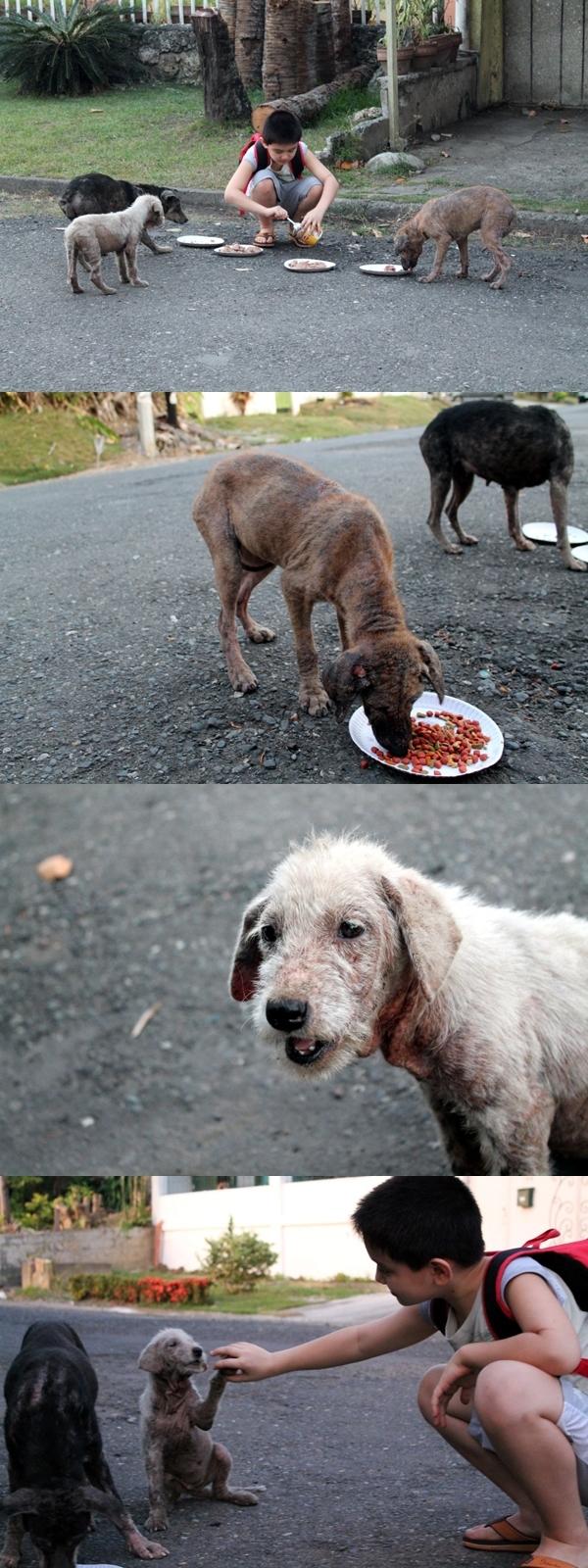 Một cậu bé người Philippines mỗi ngày đều đem thức ăn cho 4 chú chó hoang đói khát (trong đó 1 con đã bị bắt cóc) sống gần nhà. Sau khi biết việc làm của con trai, bố cậu bé liền xây cho cậu một chuồng chó trong gara nhà mình để cậu dẫn 3 chú chó còn lại về nhà chăm sóc.