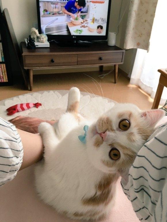 Cô nàng có những tư thế rất ngộ nghĩnh mỗi khi xem TV.