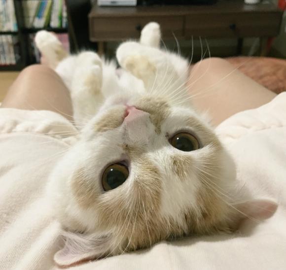 Cô mèo đốn tim chủ với 50 sắc thái ngồi xem TV siêu đáng yêu