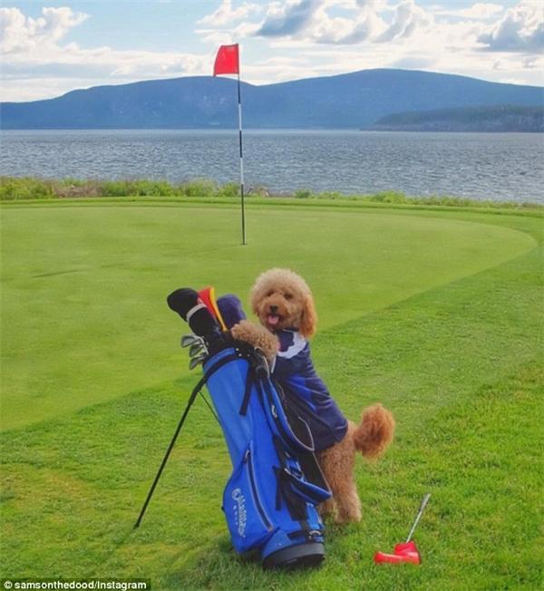 ...và đánh golf, Samson thường xuyên được trải nghiệm.