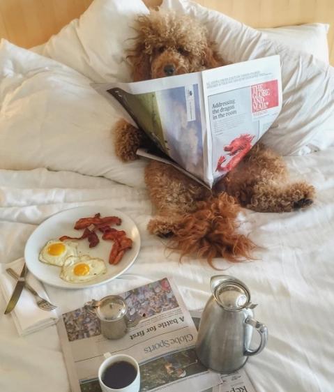 Hàng ngày Samson đều được phục vụ, chăm sóctừ bữa sáng đến giấc ngủ.