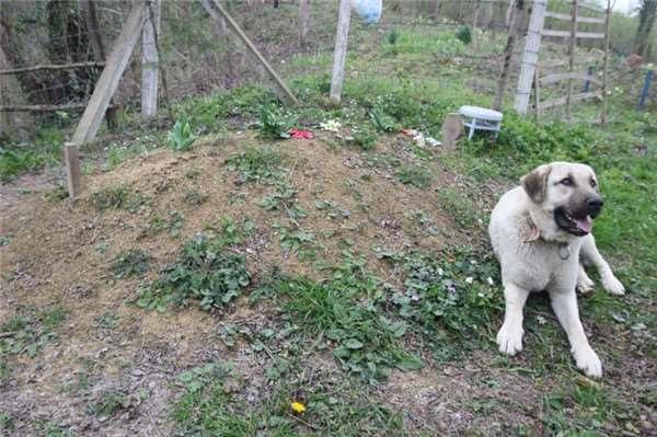 Dù chỉ là động vật nhưng Zozo biết cách thể hiện tình cảm của mình.(Ảnh Internet)