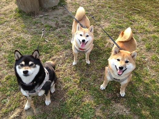 Yêu không chịu nổi với bộ ba anh em nhà cún ăn ảnh nhất Instagram