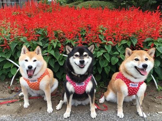 Ba chú cún này thích nhất là đi chơi vườn hoa.