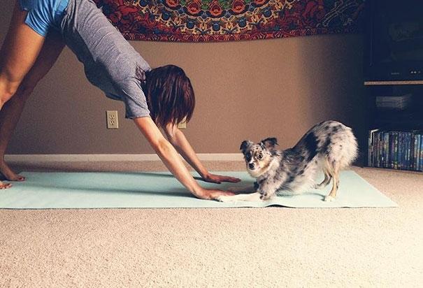Loạt thú cưng tập yoga chuẩn thần sầu khiến bạn tự xấu hổ