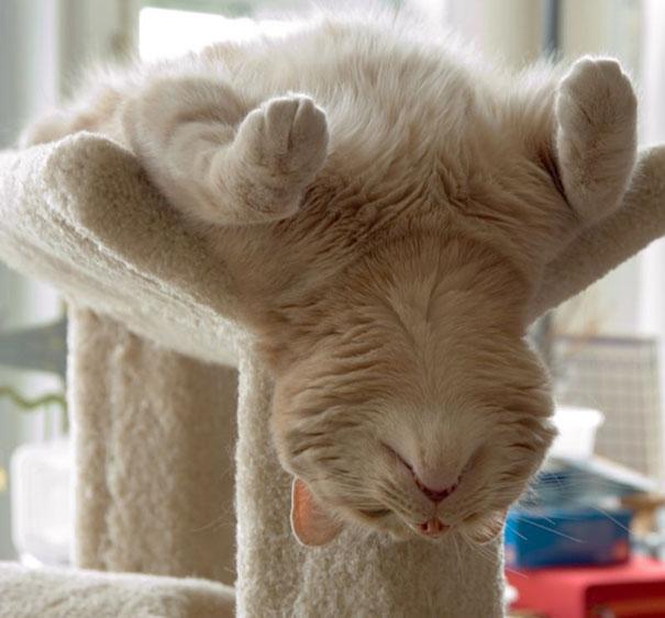 Đang tập yoga ngon lành thì bị cơn buồn ngủ đột kích.