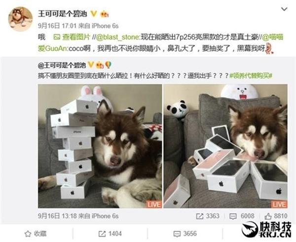 Thiếu gia giàu có nhất TQ mua hẳn 8 chiếc iPhone 7 và iPhone 7 Plus cho chó cưng