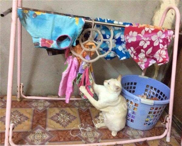 """""""Tụi này nó giặt đồ kiểu gì mà còn thối kinh hồn vậy trời?!"""""""