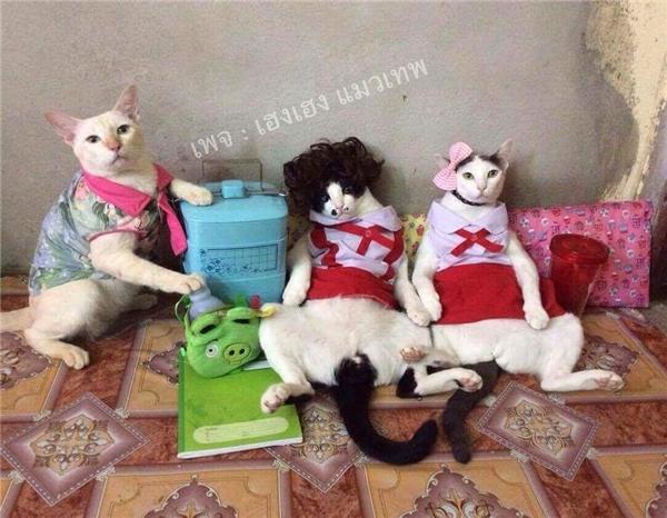 """Mèo chỉ là cái tụi lo tạodáng mà chẳng biết """"họ hàng"""" đang hớ hênh."""