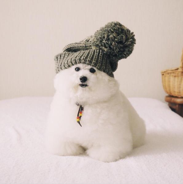 Trời bắt đầu trở lạnh rồi, phải chuẩn bị đồ len thôi.