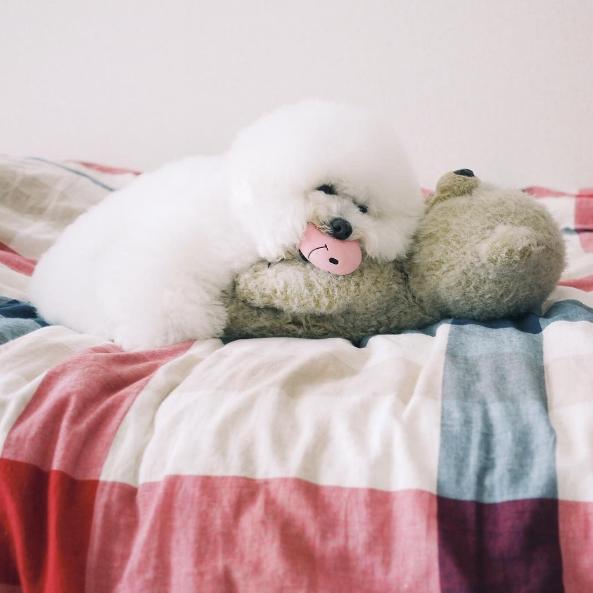 Lười quá, mìnhchỉ muốn nằm ngủ cả ngày thôi.