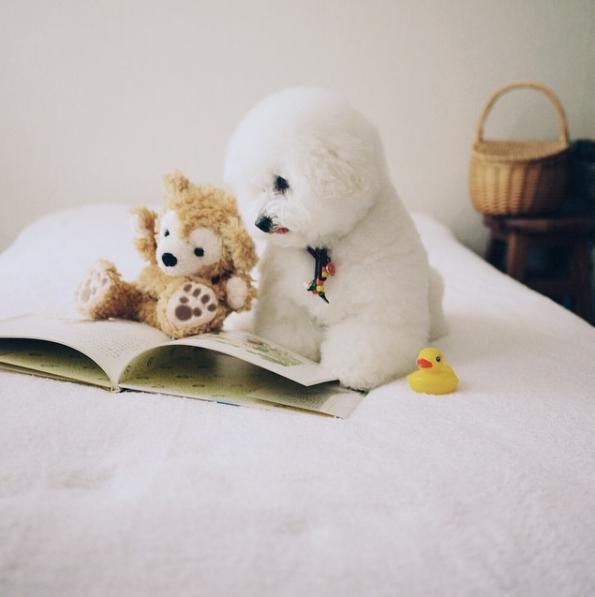 Bọn mình thích nhất là ngồi trên giường chú tâmđọc sách thế này này.