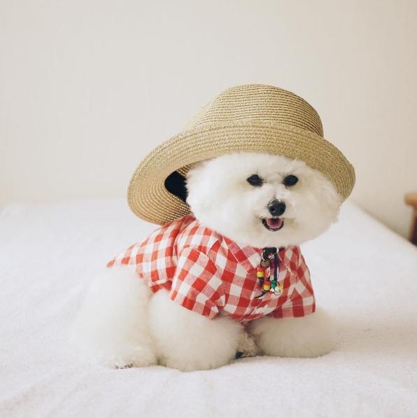 """""""Fashionista chó"""" không ai khác ngoài em."""
