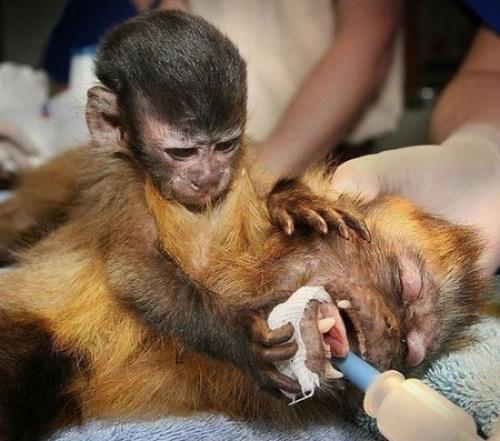 Động vật cũng có sự gắn bó và yêu thương như con người, cũng biết đau với nỗi đau của người khác, nhất là những người thân của mình.