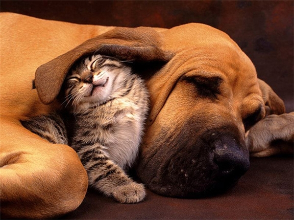 """""""Ấm nhất vẫn là nằm dưới vành tai 'vĩ đại' của anh chó""""."""