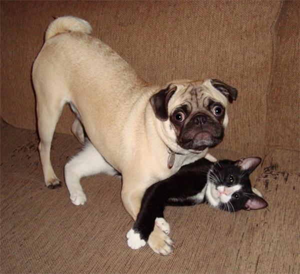 """Chó: """"Em ơi đừng hiểu lầm, anh với nó chỉ đang chơi vật lộn thôi mà"""". Mèo: """"Cô nhìn còn chưa hiểu mối quan hệ của chúng tôi là gì hả?"""""""