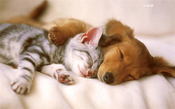 """""""Khi hai ta về một nhà, khép đôi mi chung một giường, đôi khi mơ cùng một giấc, thức giấc chung một giờ"""". Và quậy banh cả nhà cùng nhau."""