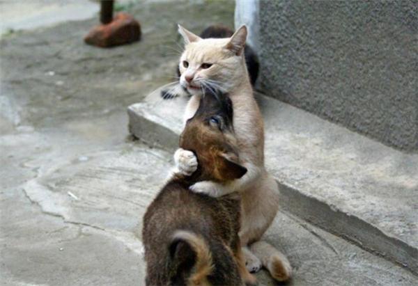 Hiếm có cô chị mèo nào yêu thương, che chở cho em trai cún hết mình thế này lắm đấy.
