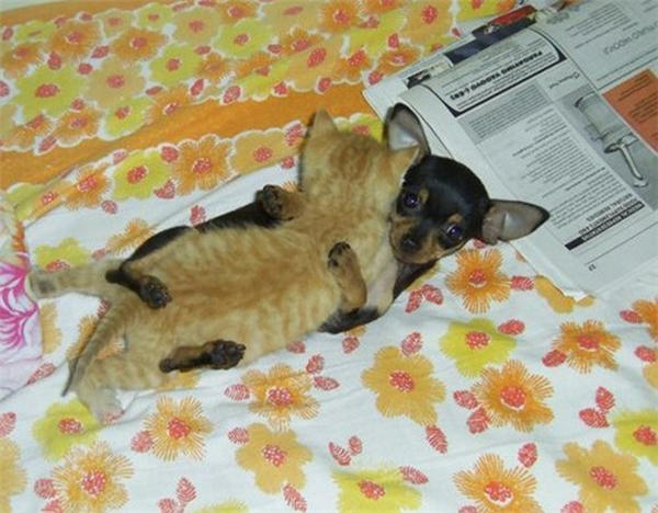 """Thích nhất là đi ngủ được ôm """"gấu bông"""" to bằng mình cơ."""