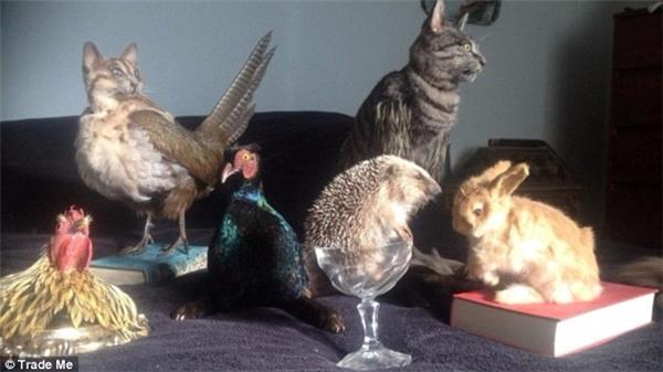 Những sản phẩm động vật nhồi bông khác được bán trên website Trademe.