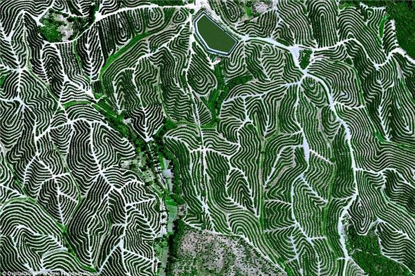 Ngọn đồi hoa quả uốn lượn ởHuelva, Tây Ban Nha. Khí hậu ở đây vô cùng lí tưởng cho cây cối phát triển với nhiệt độ trung bình khoảng 17,8 độ C và độ ẩm nằm trong khoảng 60%-80%.