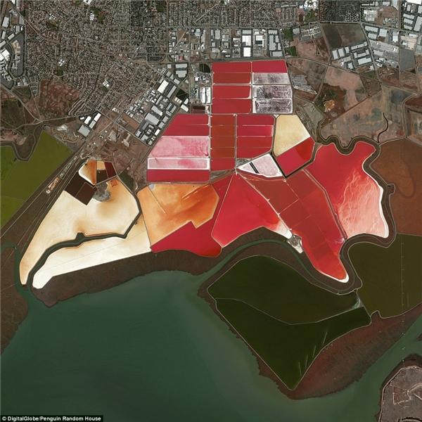 Đây là hình ảnhruộng muối ở San Francisco, California. Nước được đưa vào các ao lớn vàbắt đầu chuyển đổi thành nước mặn. Từ đó, nước muối sẽ trảiqua các quá trình làmbay hơi trước khi trở thành các tinh thể muối thực sự.Các ao lớn có màuđỏ rực rỡ của họ là domàu củatảoDunaliella.