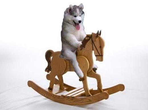 Leo dừa làm gì cho cực thân, cưỡi ngựa gỗ là an toàn nhất rồi.