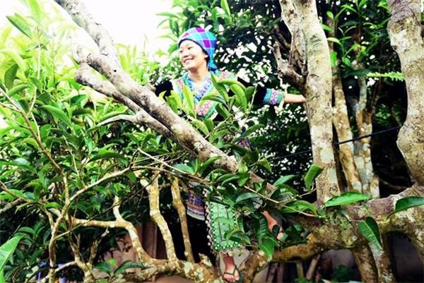 Những thiếu nữ trong trang phục thổ cẩm sắc màu nổi bật giữa rừng chè xanh tươi.