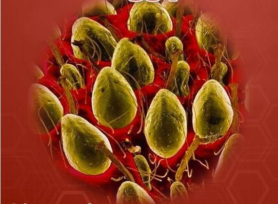Những hạt đậu xanh to tướng này thực chất là gì?(Ảnh: Internet)