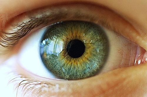 Mà là ảnh chụp dưới kính hiển vi của... tròng mắt người. (Ảnh: Internet)