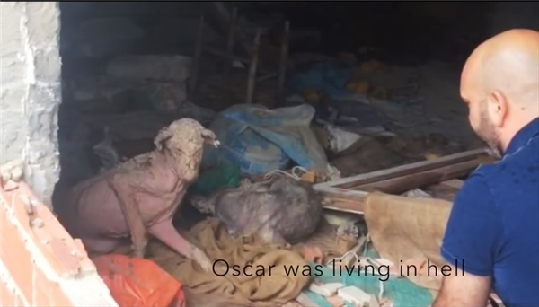 Người ta tìm được Oscartrong căn nhà tồi tàn. (Ảnh: Internet)