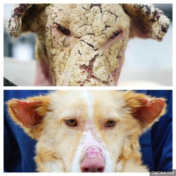 Cái kết mừng rơi nước mắt của hai mẹ con chú chó cận kề cái chết