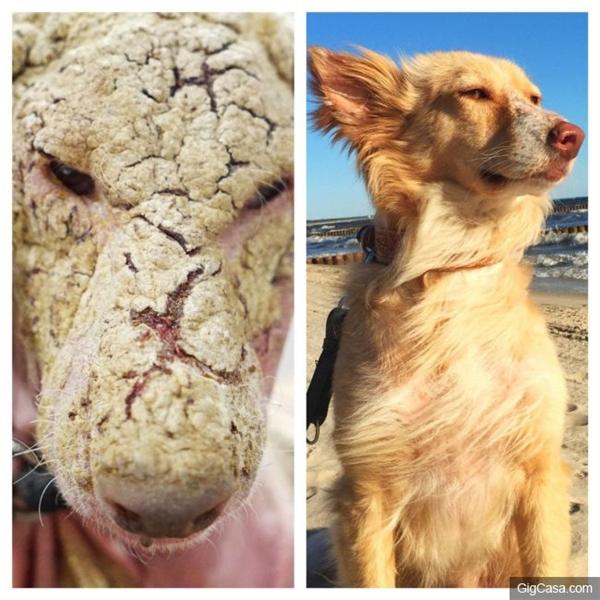 Từ những chú chó cận kề với cái chết, giờ đây hai mẹ con Oscarđều vô cùng dễ thương và khỏe mạnh.(Ảnh: gigcasa)