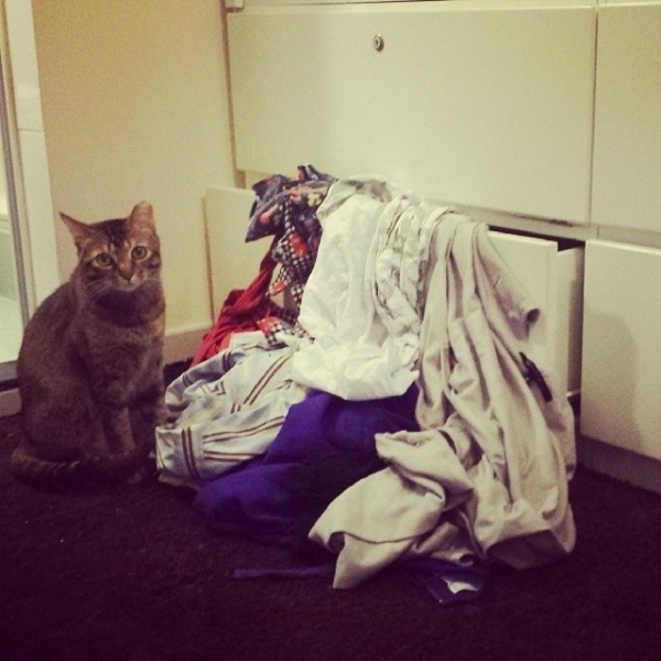 """""""Em chỉ đang tìm đồ chơi của mình thôi mà""""."""