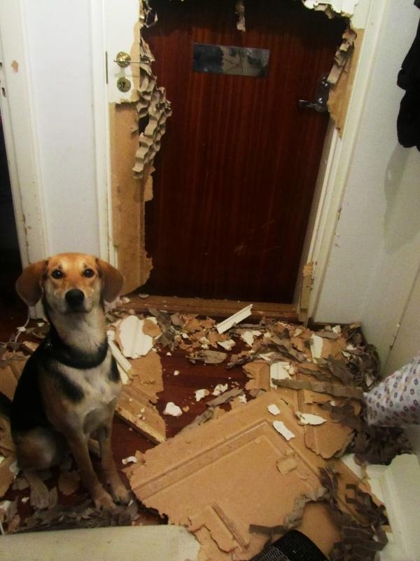 """Sen xem mối mọt ăn sập cả cửa rồi này!?"""