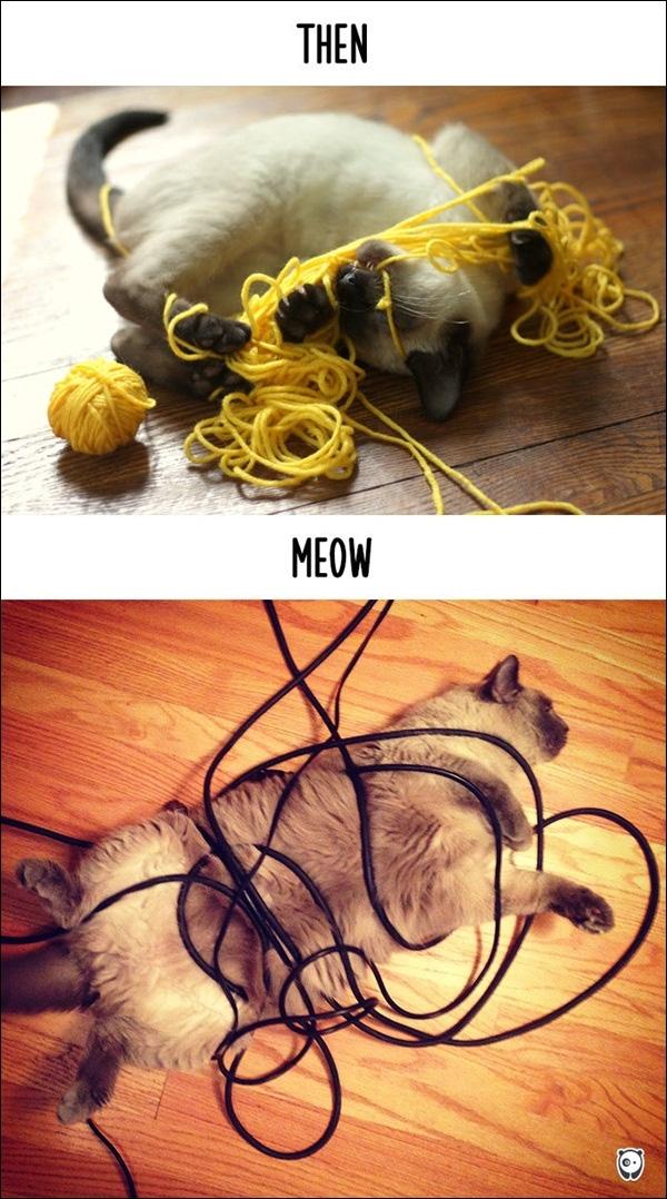 """Hồi xưa mình bị kẹt trong cuộn lencòn đỡ, bây giờ kẹt trong dây điện, lỡ nhích một tí thôi là có ngay món """"mèo nướng""""."""