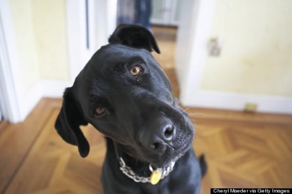 Những chú cún có thật sự hiểu lời nói của chúng ta? (Ảnh minh họa - Nguồn: Internet)