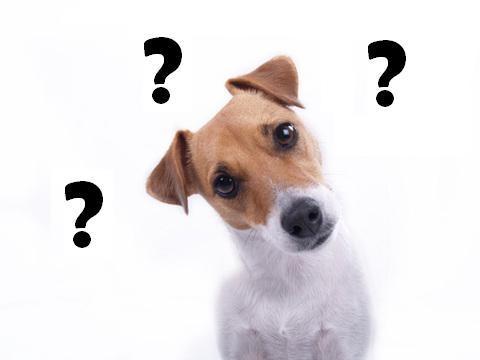 Nếu chó và người có cùng cơ chế trong tiếp nhận lời nói, vậy cái gì đã ngăn cản chúng ta giao tiếp với cún cưng? (Ảnh minh họa - Nguồn: Internet)