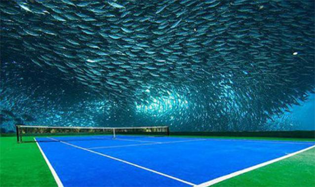 Đánh tennis dưới lòng đại dương mới là đẳng cấp.(Ảnh: Internet)
