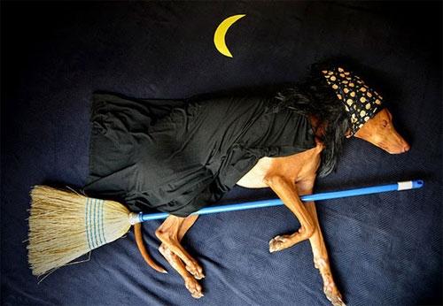 Tới ngủ cũng không yên nữa, tui mà bay lên cung trăng thiệt thì đừng có ở đó mà khóc lóc nha.