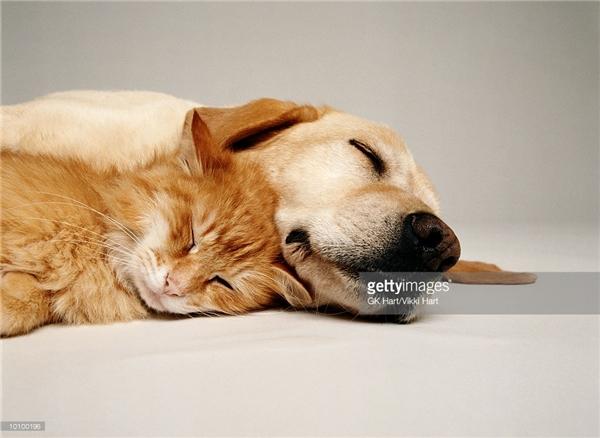 Ngủ cũng phải có gối ôm mới phê